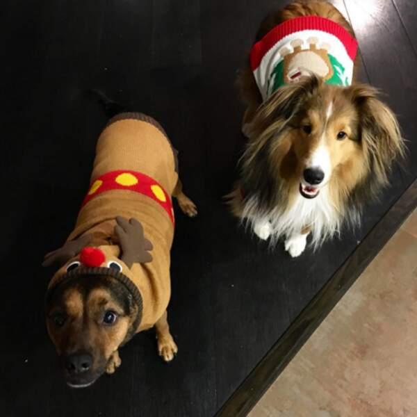 Instant mignon : les chiens de Miley Cyrus sont prêts pour Noël !