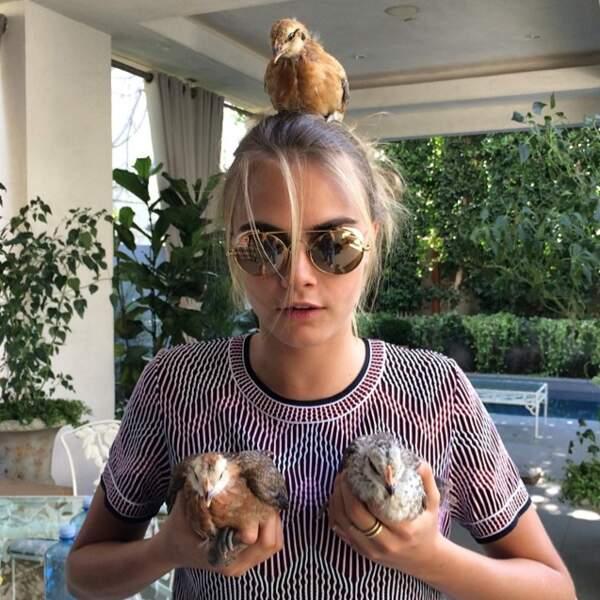 Des petites poules trop mignonnes
