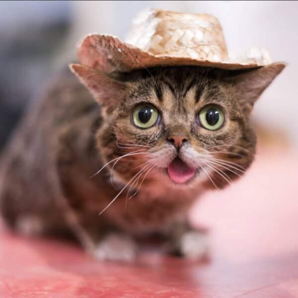 """Lil Bub, proclamé """" le chat le plus mignon du web""""."""
