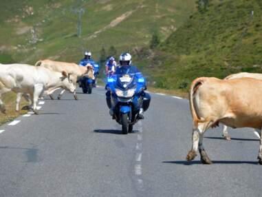 Tour de France insolite : des vaches, des fesses et des indiens...