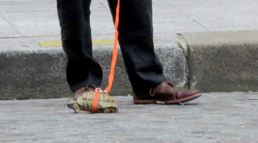 … mini tortue ! On espère qu'il n'a pas laissé les crottes de l'animal sur le trottoir !