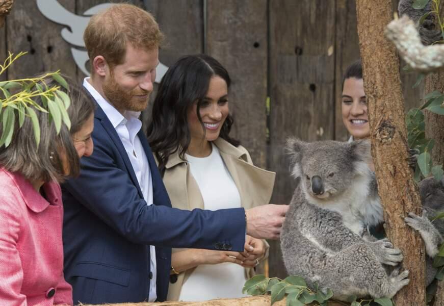 Harry et Meghan font la connaissance de Ruby un des koalas du zoo de Sydney
