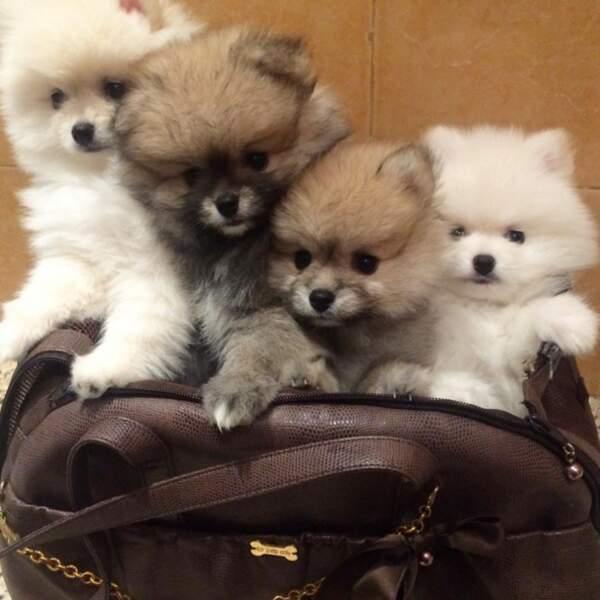 Ou que les 4 chiens adoptés par Leila Ben Khalifa. NEEEEEED !