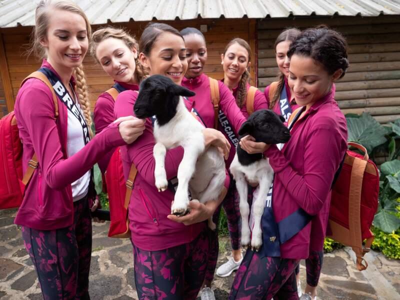 Pause tendresse avec des chèvres