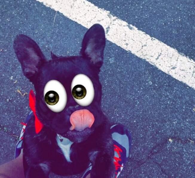 """Cara est un chien de son époque, déjà """"a-croc"""" à Snapchat"""