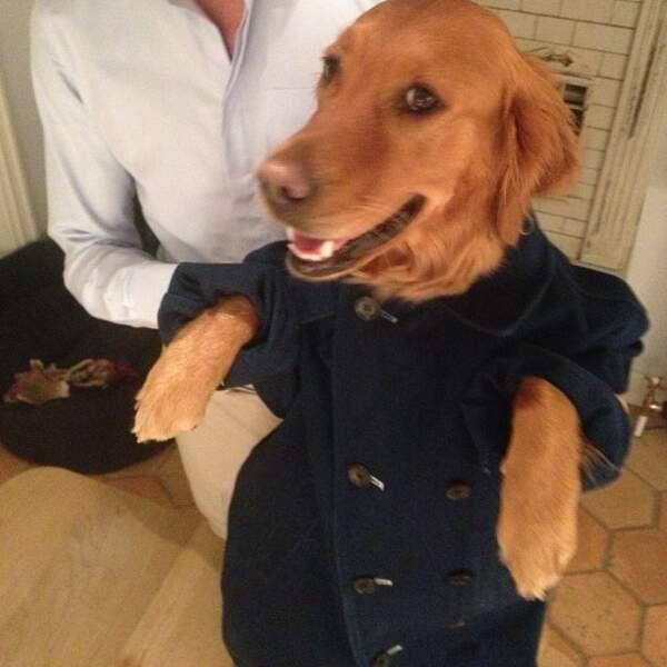 Et lui fait porter des veste. Celle-ci est particulièrement rigolote