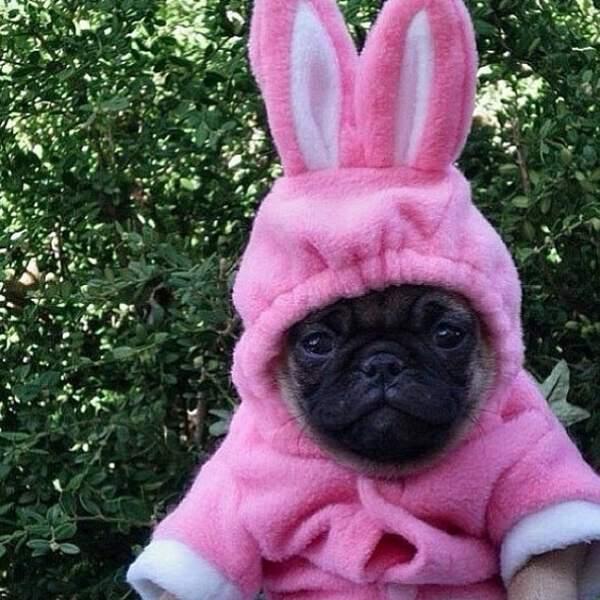 Petite pause cute avec ce chien transformé en lapin.