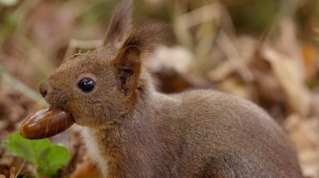 Ce petit lapin, une vraie peluche