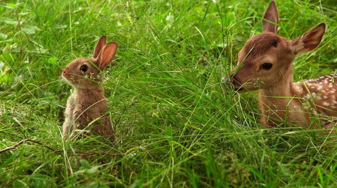 Ils sont presque aussi mignons que ce faon et ce petit lapin