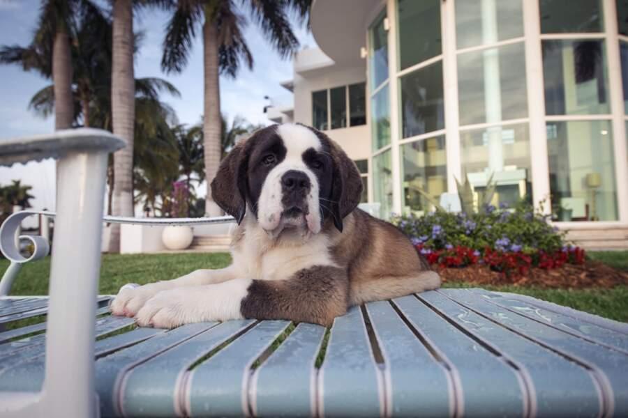 Angel a deux mois et demi et veut devenir une IT Dog (une chienne swagg, tendance, quoi)