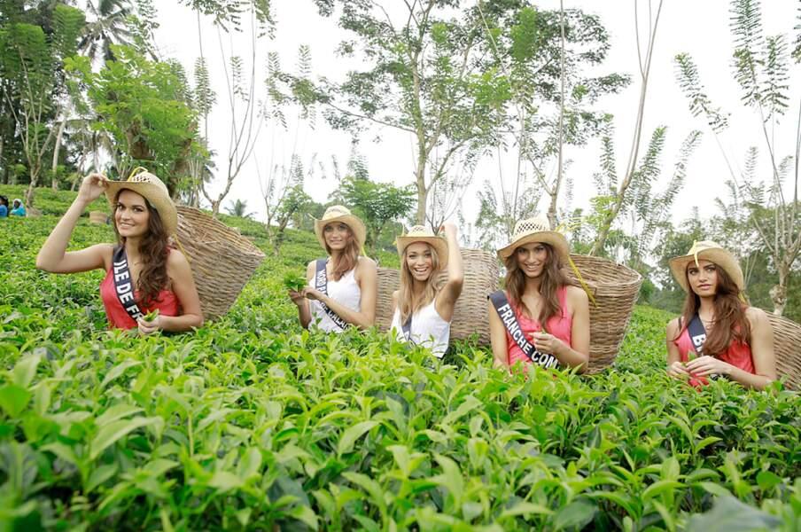 Visite d'une plantation de thé pour les Miss France 2014