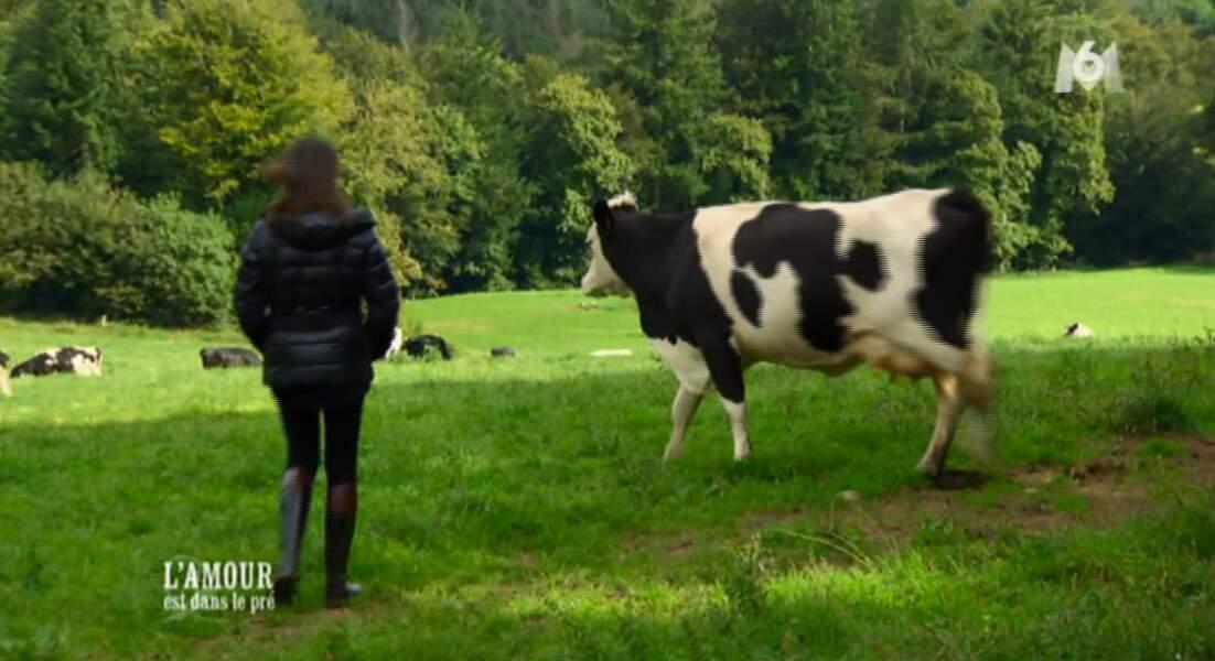Apeurée la vache préfère s'éclipser. Elle ne souhaite pas exposer sa vie privée aux caméras.