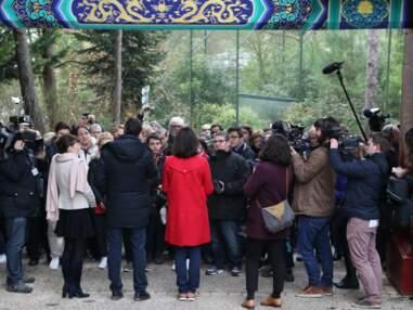 Le bébé panda du Zoo de Beauval fait ses premiers pas en public !