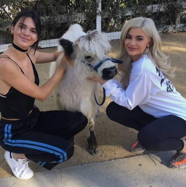 Passons aux insolites de la semaine, avec Kendall et Kylie Jenner qui posent avec une vache à poils longs