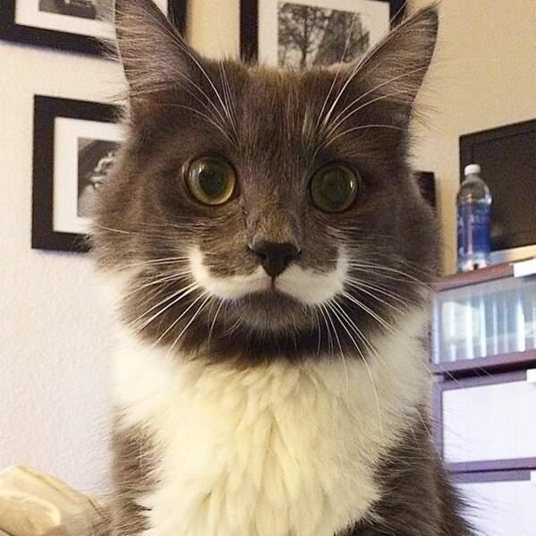 Son atout, une superbe moustache.