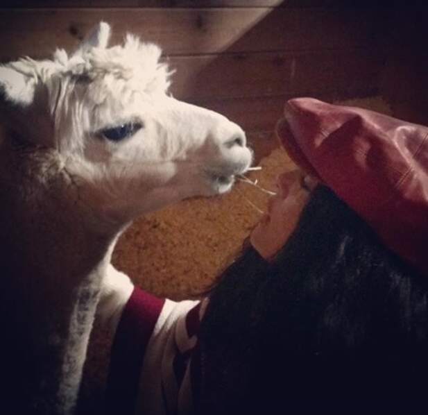 Allez, en vrac avant de vous quitter : Salma Hayek a posé avec son lama de compagnie, Elliot.