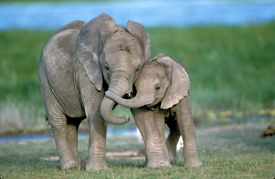 Cette mère et son éléphanteau nous donnent sérieusement envie de revoir Dumbo.