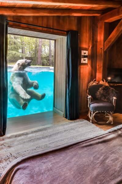 Vivez au plus près des ours polaires au zoo de la Flèche, où est tourné le programme de France 4 (La Flèche, 72)