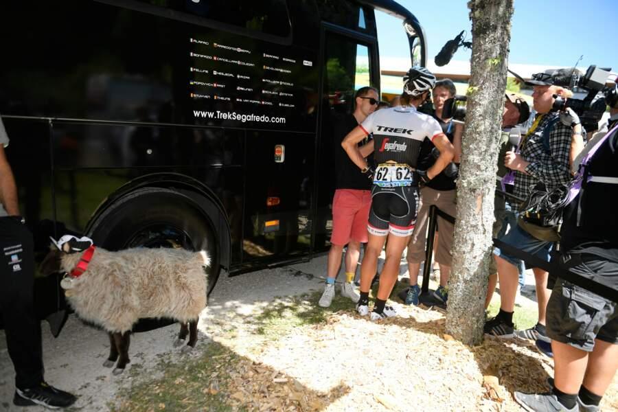 Fabian, ya un mouton derrière toi !