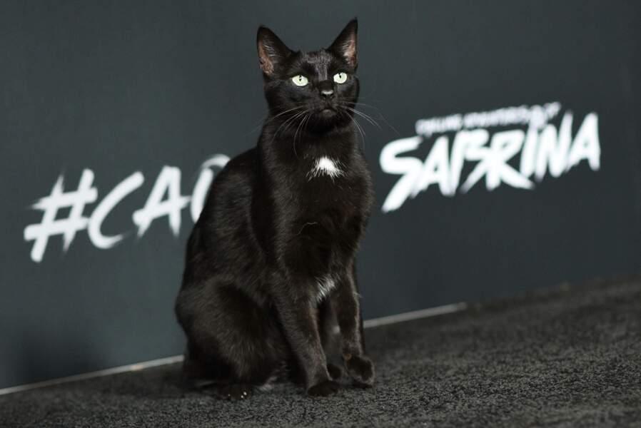 Dans le reboot, un vrai chat a pris sa place... et c'est déjà une star !
