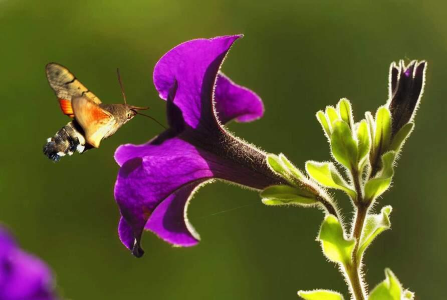 Instant poésie avec ce petit papillon. Si ça c'est pas joli !