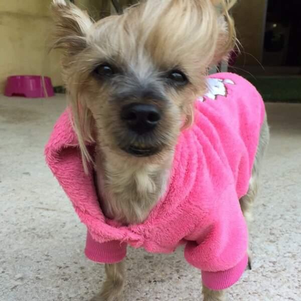 Le chien de Kim des Marseillais porte les mêmes survêtements que Frigide Barjot.