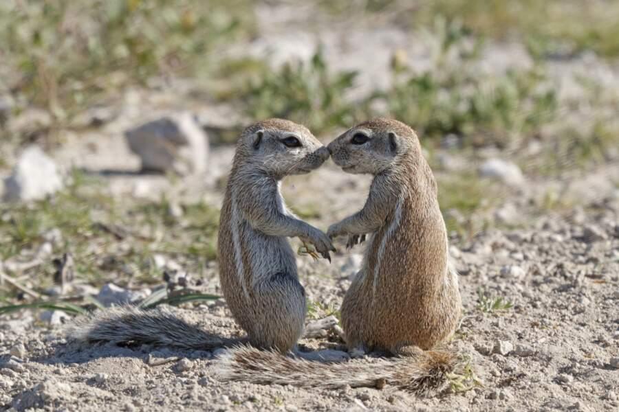 Vous passez une mauvaise journée ? On parie que ces écureuils vont vous redonner du baume au cœur.