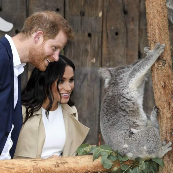 Ruby le koala pas farouche auprès du couple princier