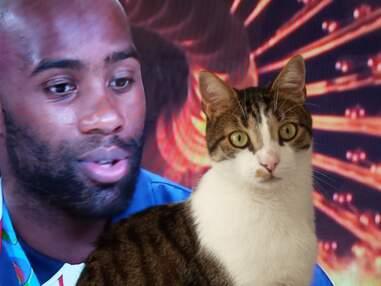 Découvrez les chats de la rédac de Télé Loisirs