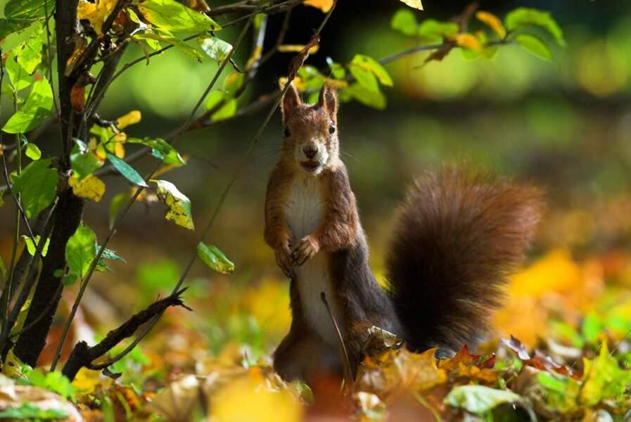 Oulà ! Ce petit écureuil a l'air TRES surpris d'être pris en photo !