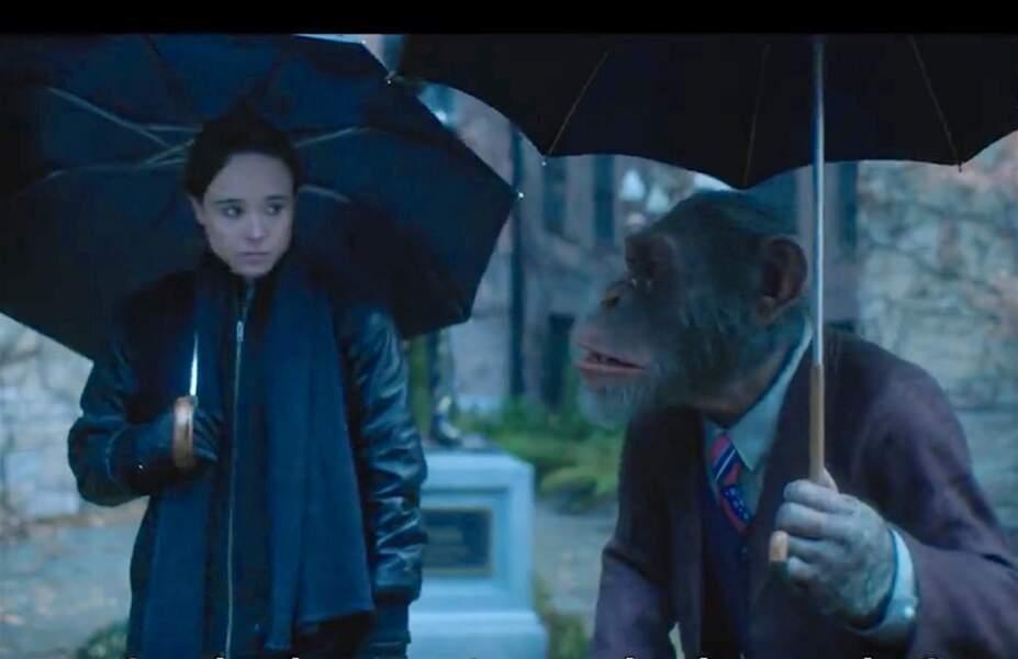 Les parapluies ont remplacé les masques. Tiens, il y a un singe : c'est Pogo, le chimpanzé qui parle