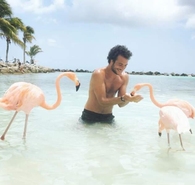 Jalousie ultime pour Amir à Aruba avec ses potes flamands roses.