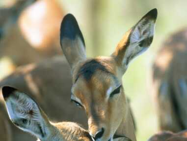 Le livre de la jungle : les photos les plus mignonnes des animaux de la jungle et de la savane