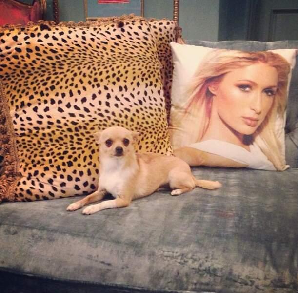 Paris Hilton nous présente son chien, Peter