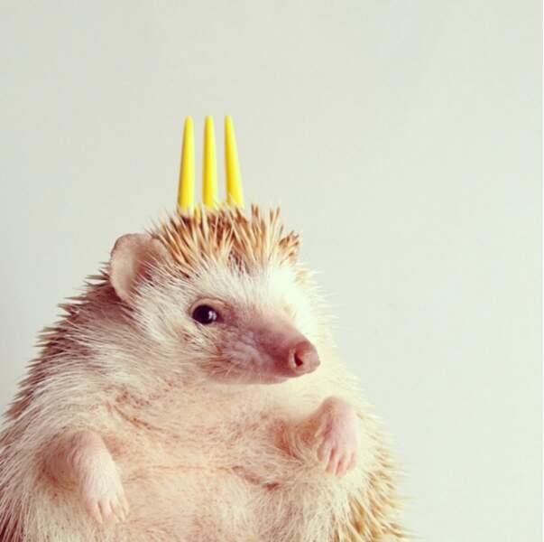 Un hérisson roi sur le web !