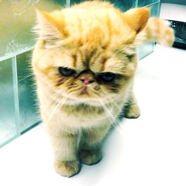 On a du mal à se décider : le chat de Justin Bieber est-il mignon, ou flippant ?