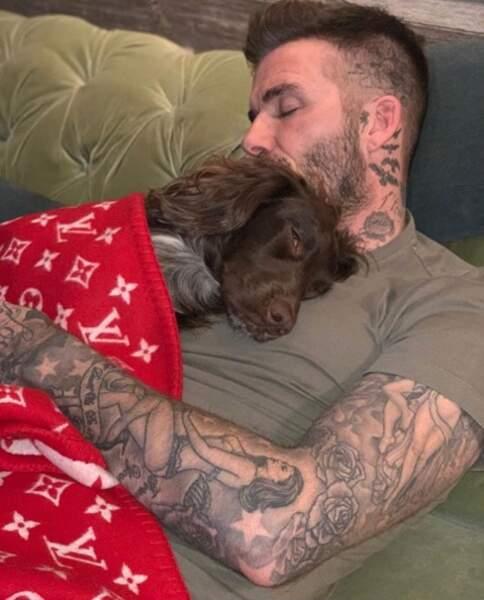 David Beckham dans les bras de Morphée… Euh non, d'Olive, son cocker.