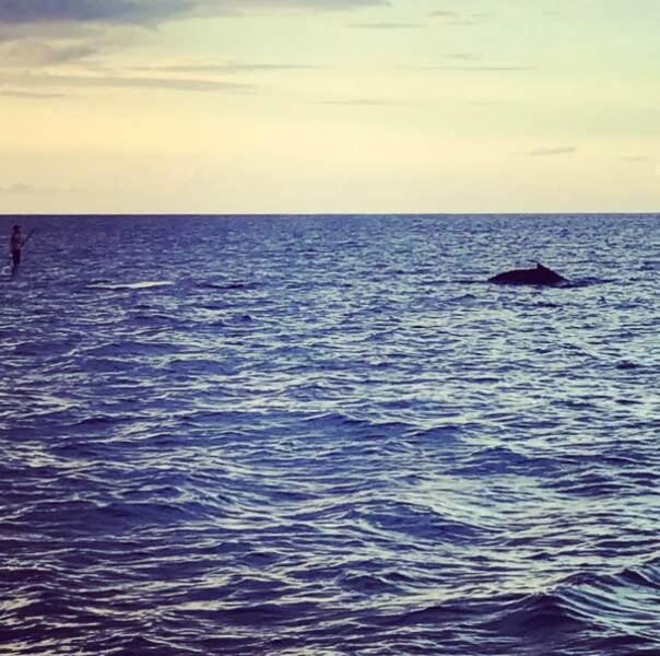 Chose promise, chose due : une baleine