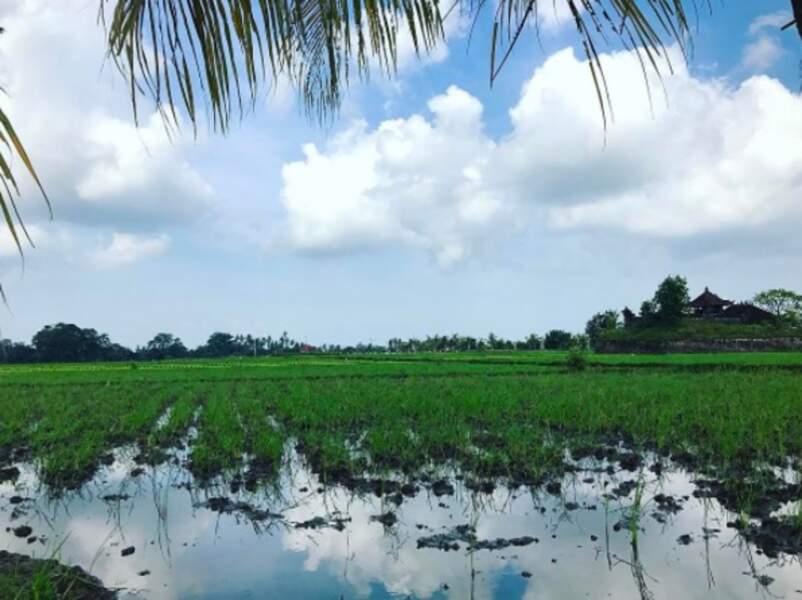 Du côté de Bali, ils découvrent des rizières. Un paysage à couper le souffle !