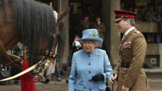 Quand la reine Elisabeth II envoie un de ses chevaux en France... pour qu'il se reproduise !