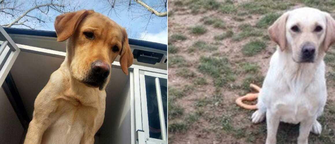 Un appel à témoins lancés pour retrouver... deux chiens
