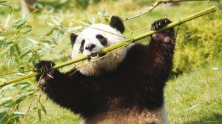 ZooParc de Beauval : bons plans et nouveautés