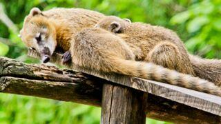 Une saison au zoo : la saison 2 arrive sur France 4 le...