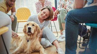 Des chiens formés pour sauver les diabétiques !