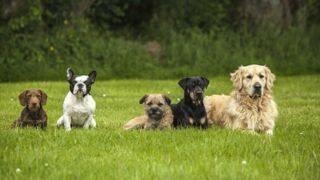 Journée mondiale du chien : quelle race choisir ? Faites le test !