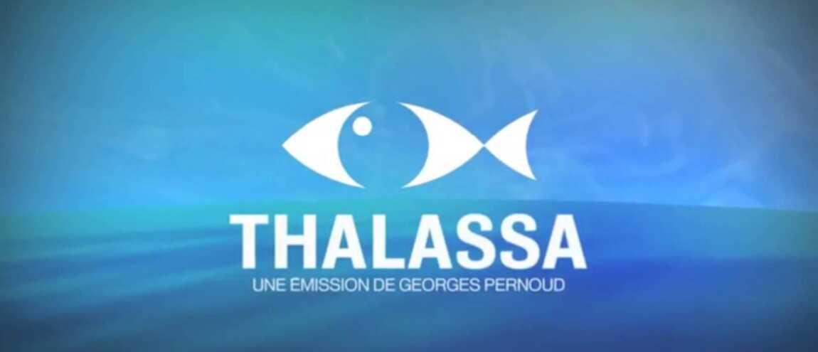 emissions thalassa