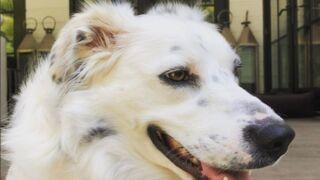 Cheyenne, la chienne de Johnny Hallyday, a enfin son compte Instagram (PHOTOS)