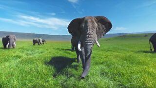 Réalité virtuelle : suivez un troupeau d'éléphants sauvages en vidéo immersive
