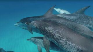 Réalité virtuelle : et si vous faisiez de la plongée avec des dauphins !