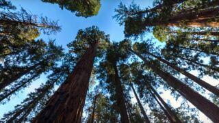 Réalité virtuelle : escaladez des séquoias géants grâce à la vidéo 360°